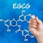 EGCG ein besonderer Inhaltsstoff in Matcha