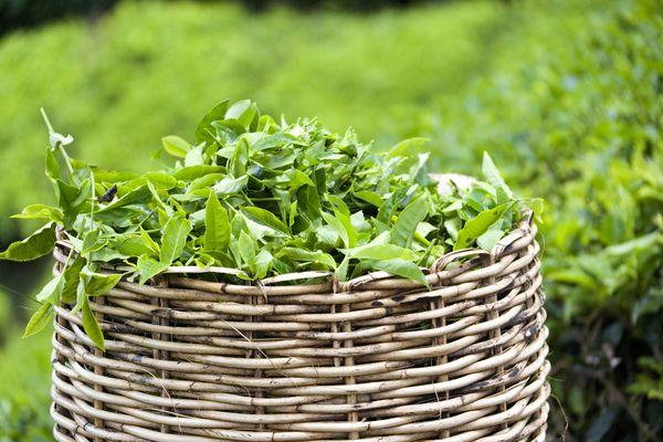Korb mit japanischem Grüntee und Matcha Teeblättern